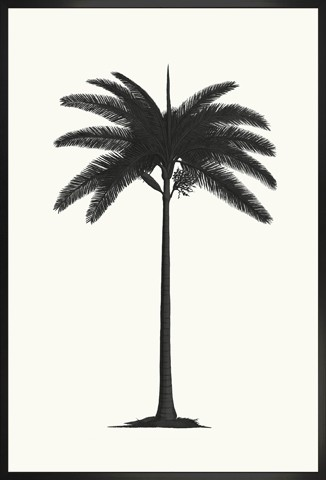 """Royal Palm Silhouette"""