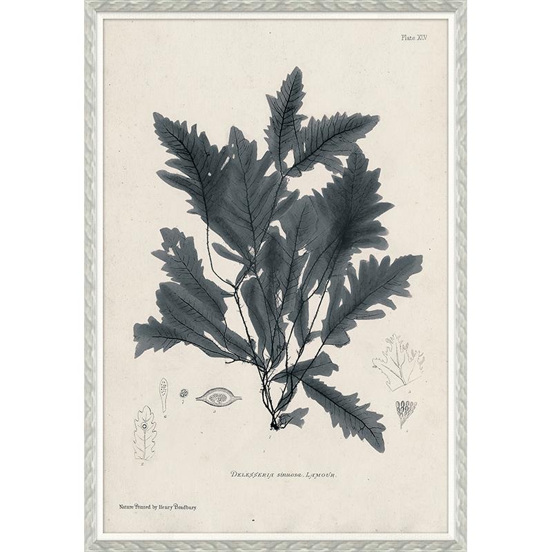 """""""Seaweed in Grey"""""""