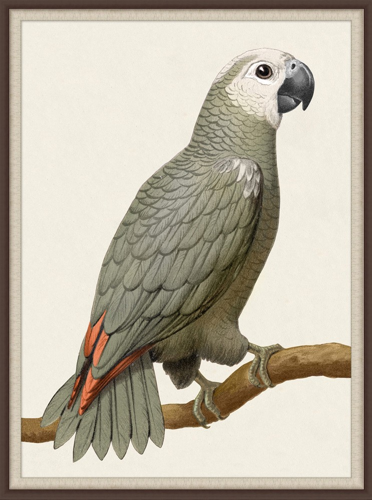 """""""Grey Parrot I"""""""