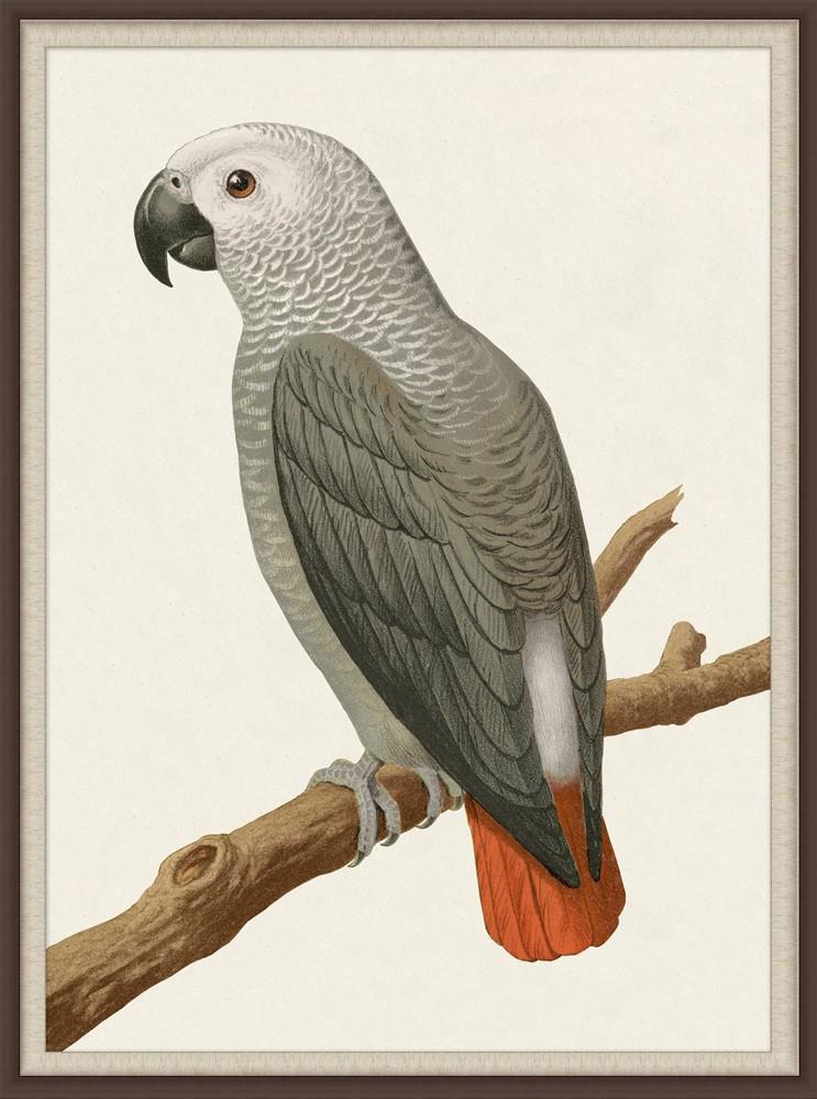"""""""Grey Parrot II"""""""