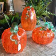 Conrad's pumpkins (2)