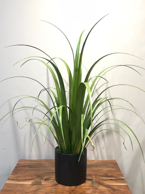 Reed Grass in Black Cylinder