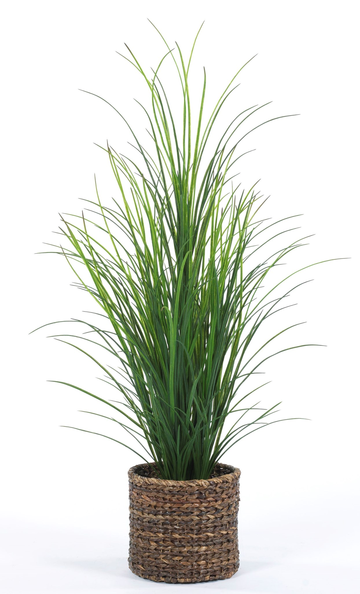5′ Grass