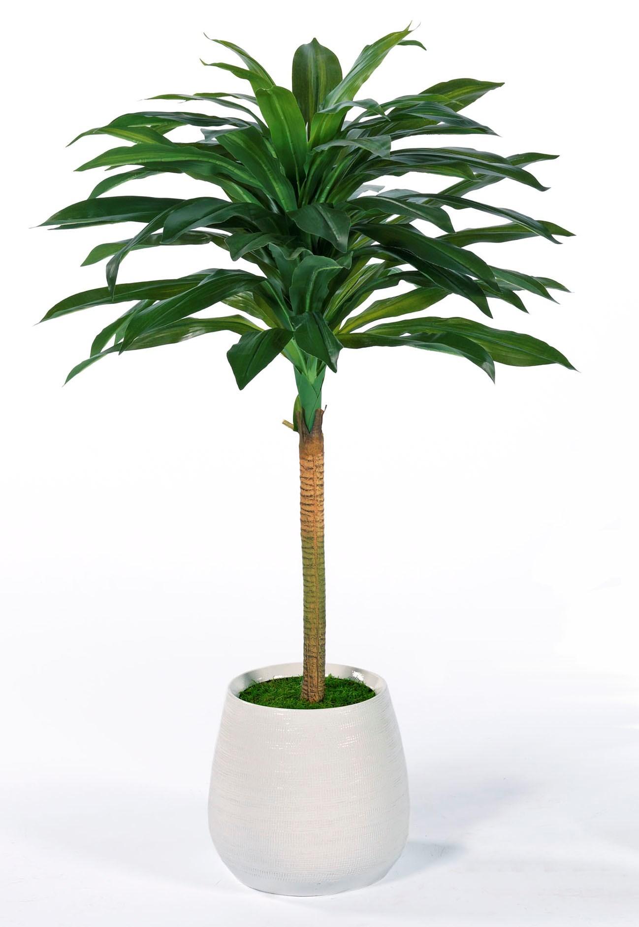4′ Modern Dracena Topiary