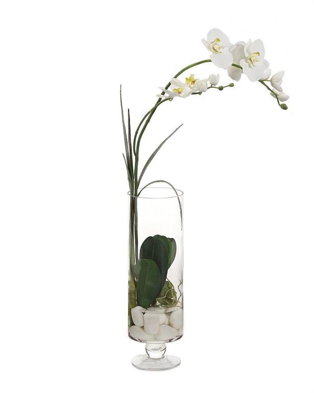 Sunken Orchid