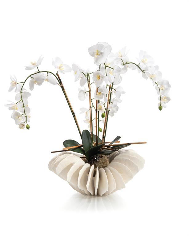 Sea Coral Orchids