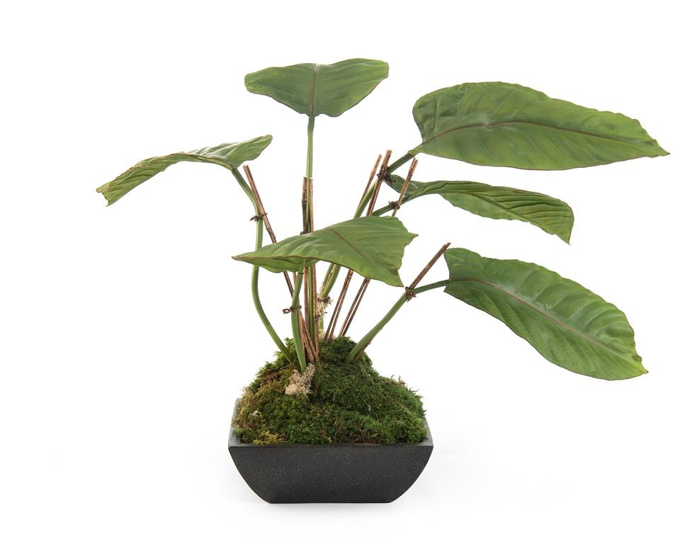 Tropical Philodendron