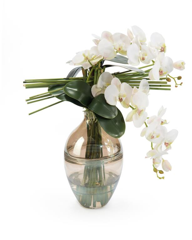 Pale Pink Orchids