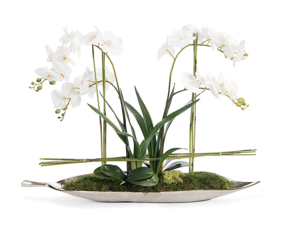 Silver Leaf Orchids