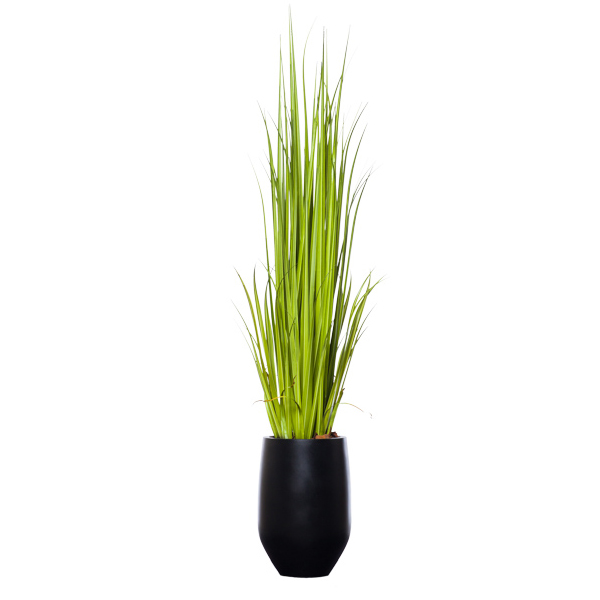 Gladiolus Grass in Black Terrazzo Pot
