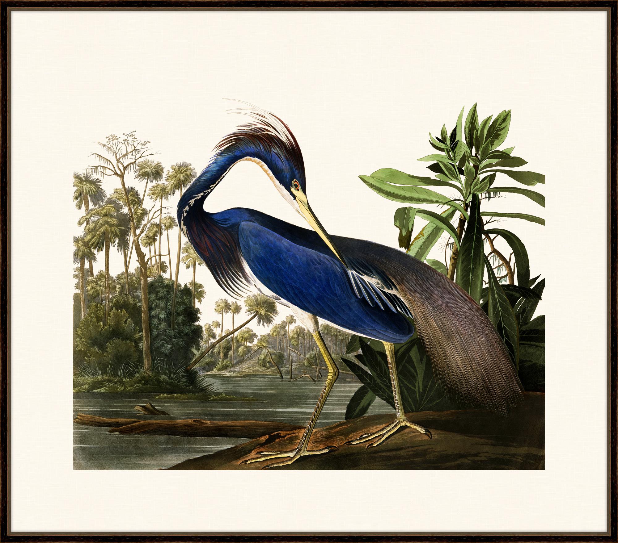 """""""Audubon's Louisiana Heron""""-$978.00"""