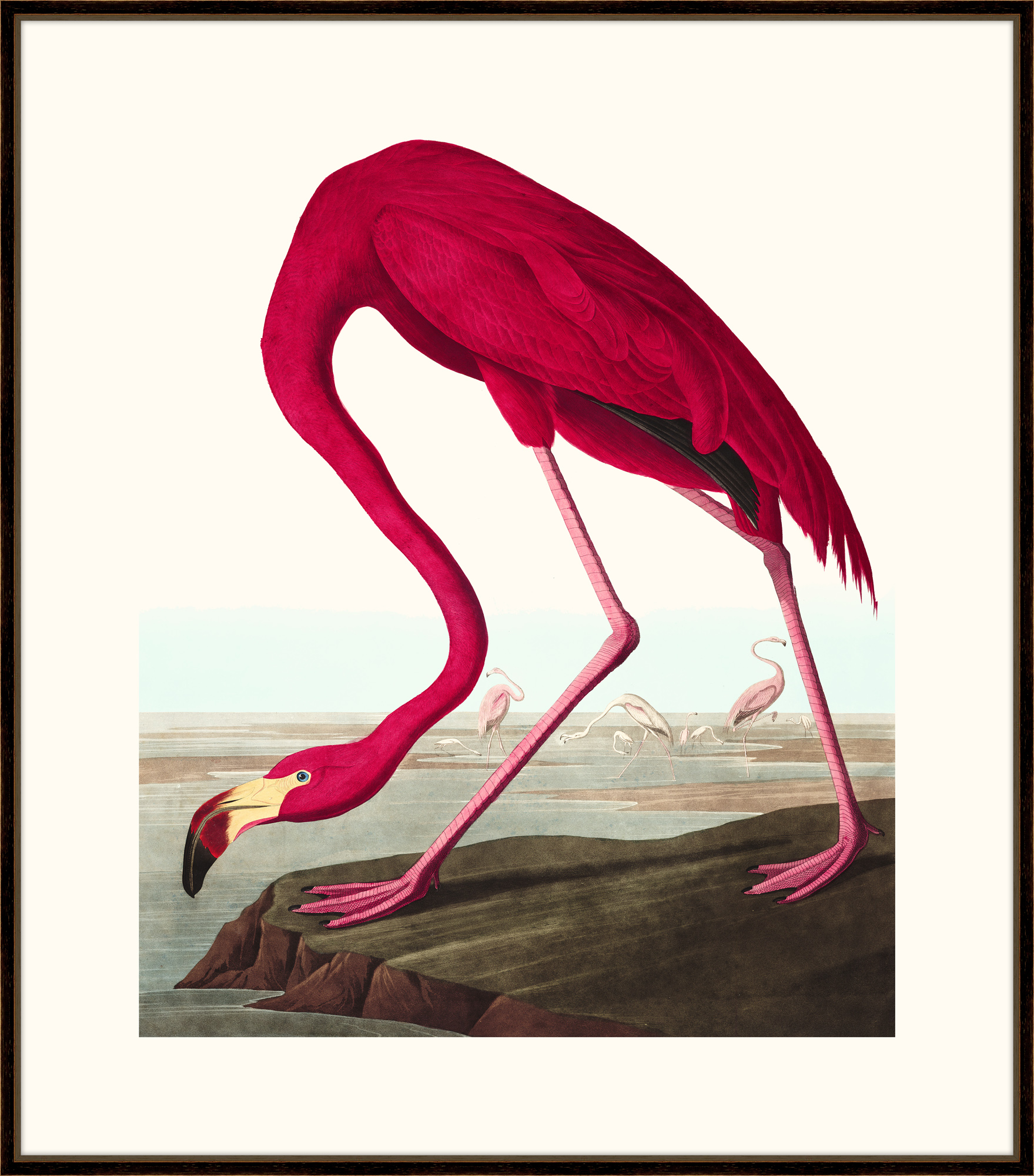 """Audubon's American Flamingo""-$978.00"