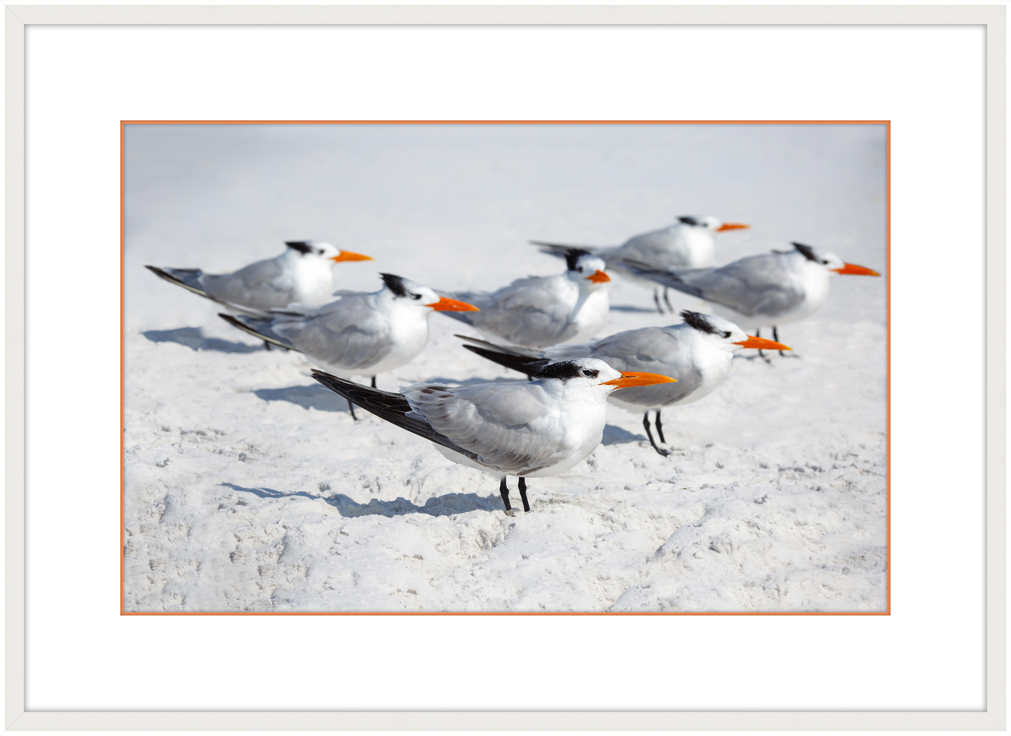 """Royal Terns I"""