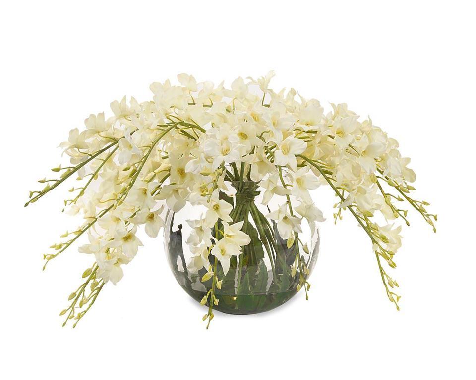 Enchanting Dendrobiums