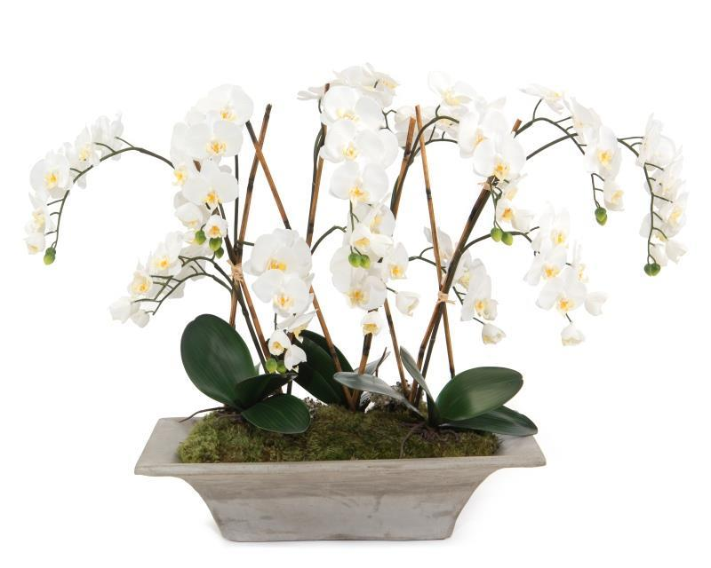 Armature Orchids