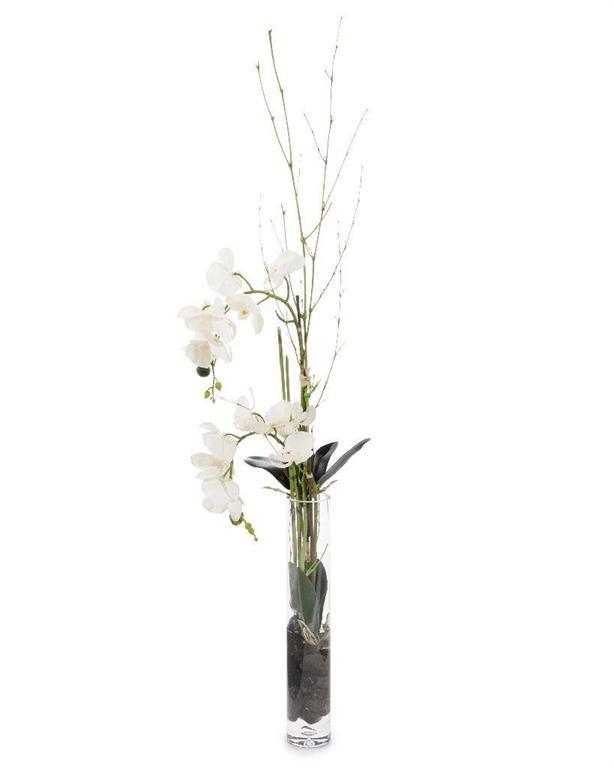Slender Orchids