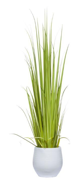 Gladiolus Grass-$686.00