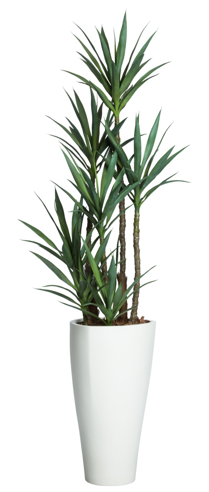 Deluxe Skinny Yucca