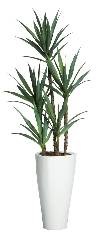 Skinny Yucca Tree-$825.00
