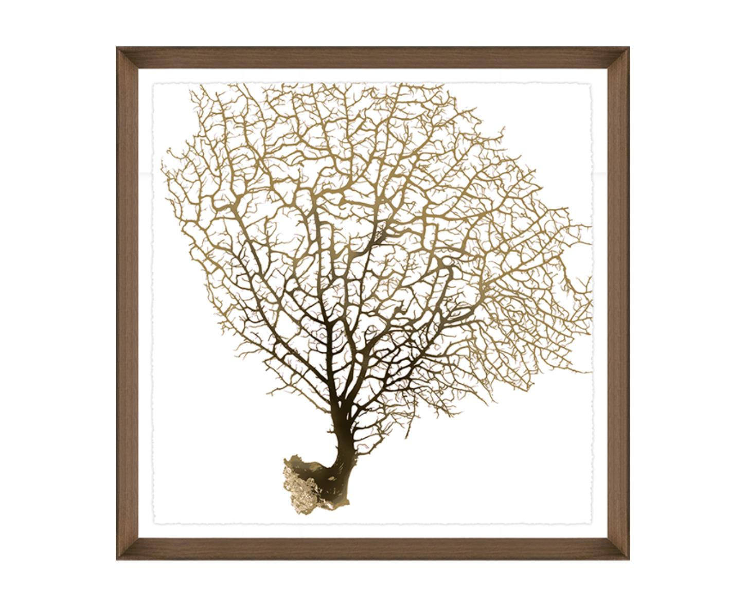 """Sea Fan II"""
