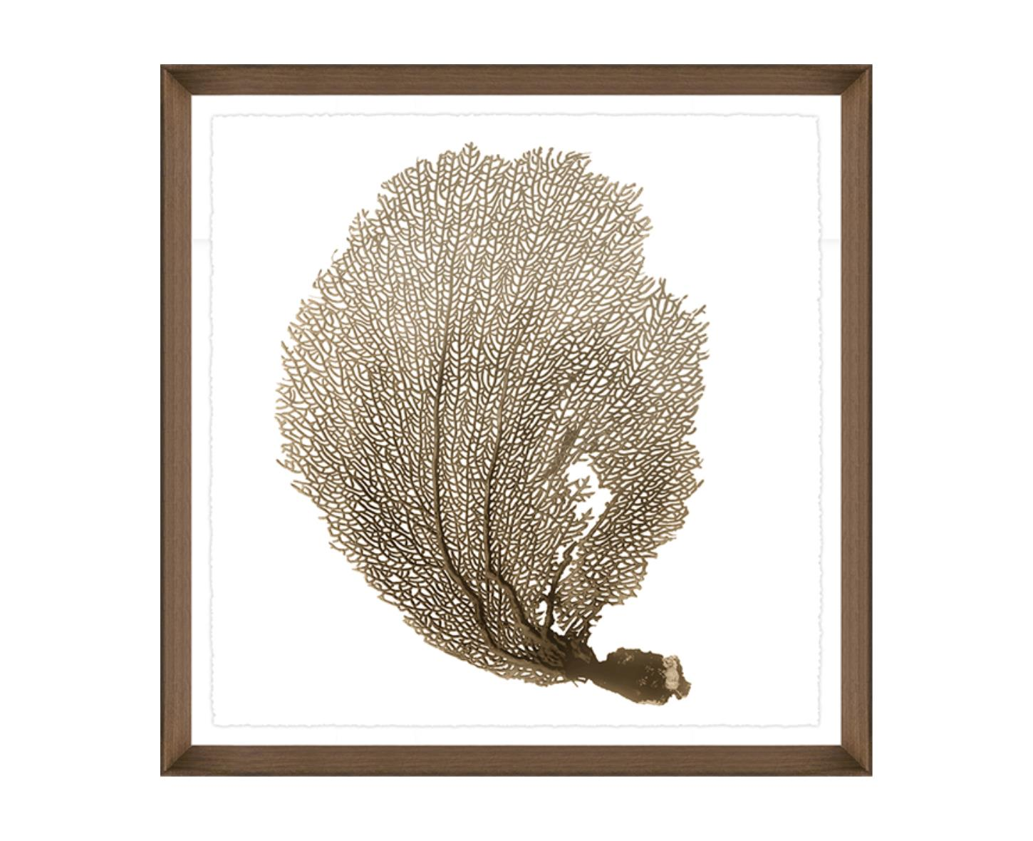 """Sea Fan IV"""