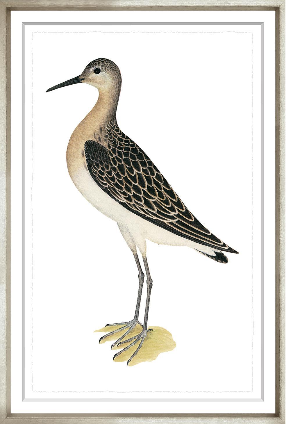 """Swedish Birds 5""-$345.00"
