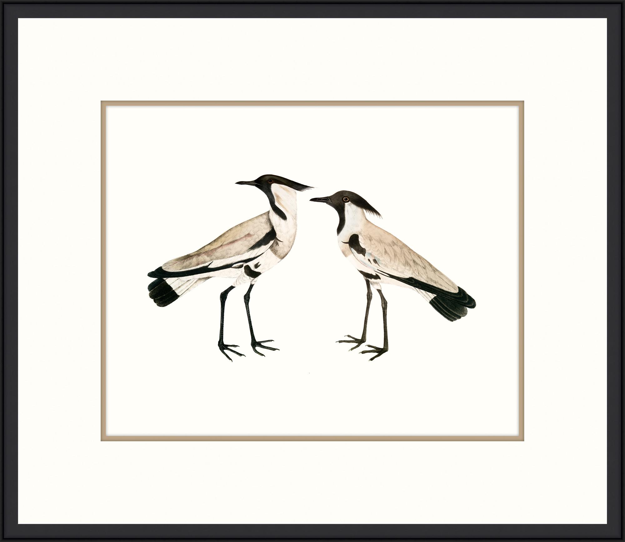 """""""Sea Birds I"""""""