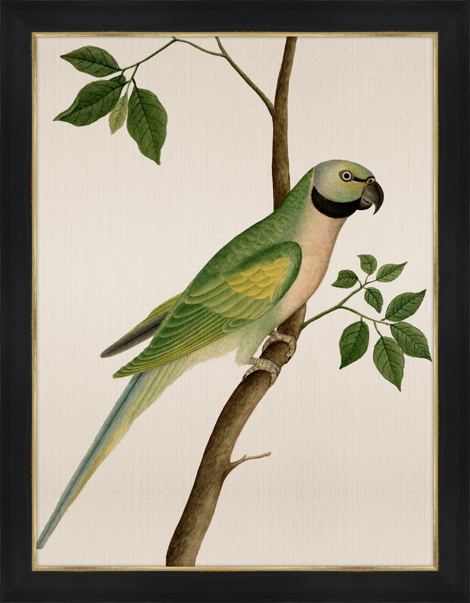 """""""Green Parrot"""""""