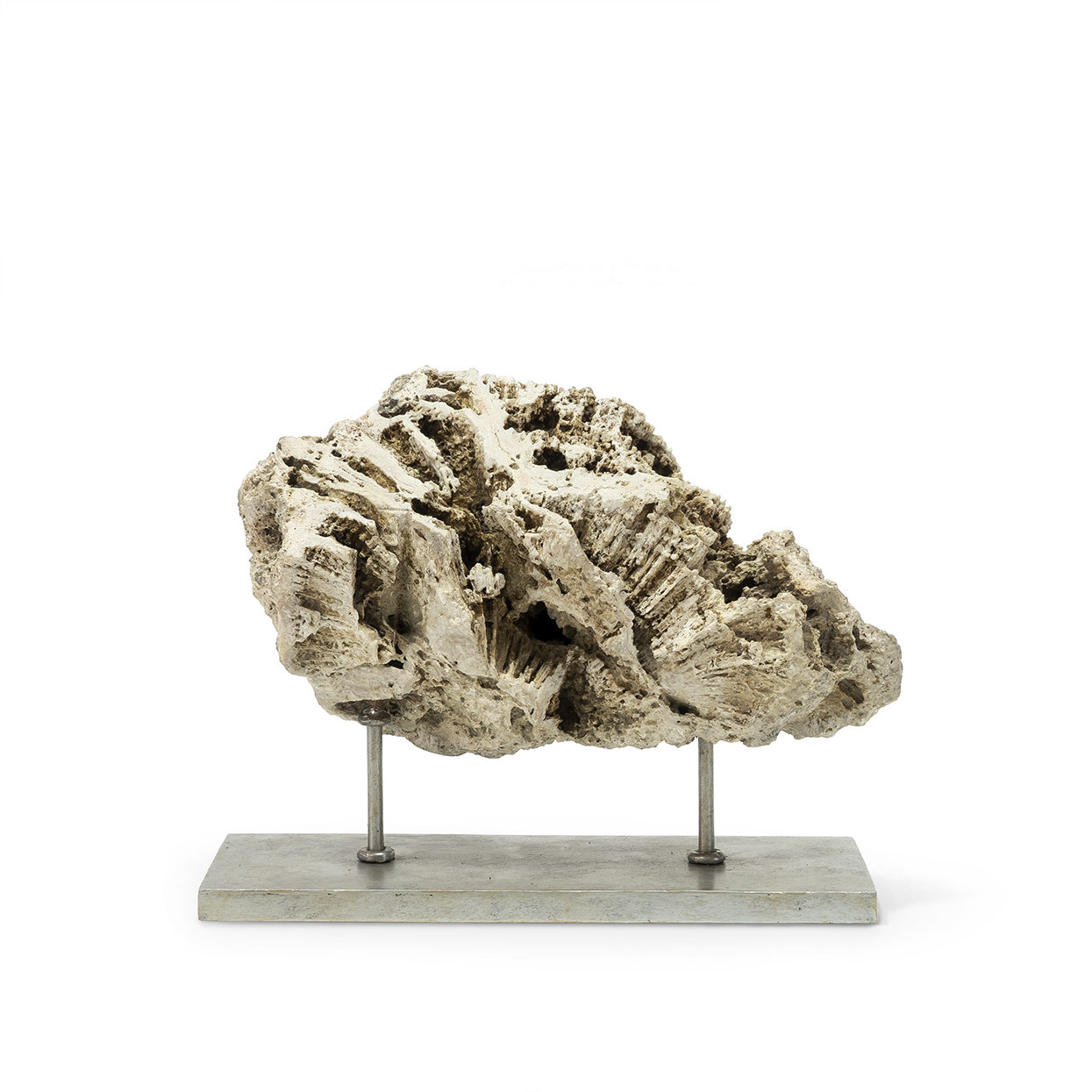 Fossilized Coral-$375.00